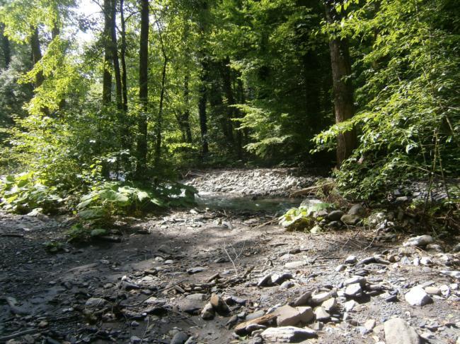 Batsara Reserve stream